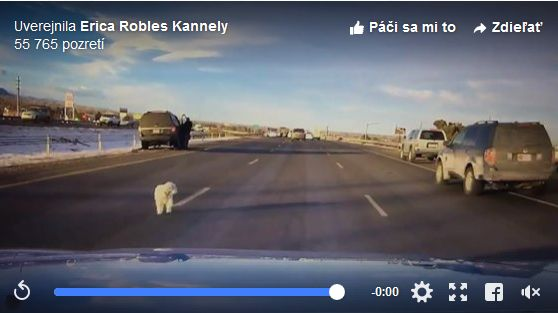 VIDEO: Pozor na zvieratá v aute, tento pes mal šťastie v nešťastí!